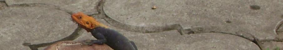 cropped-lizard-004.jpg
